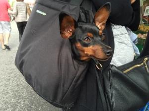 Pet à porter